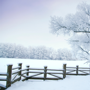 Image of snowy farm field